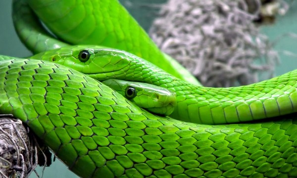 Змии, крокодили, лъвове... и още опасни твари у дома!
