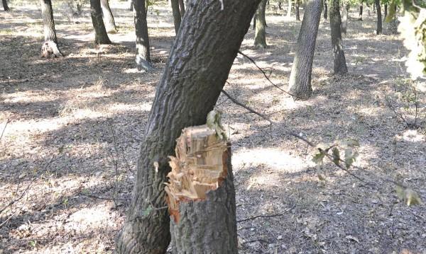 Млад мъж загина при дърводобив в Горни Лом