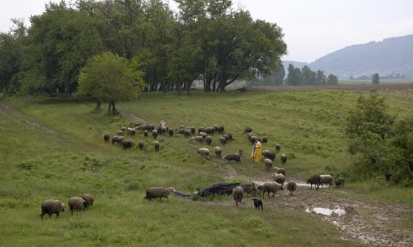 Съмнения за чума при животните и в Благоевградско