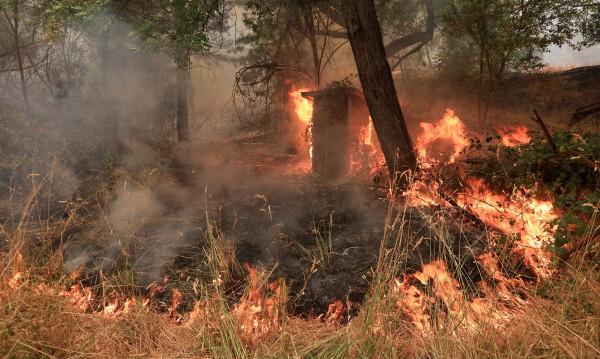 Вятър разпалва ада в Калифорния, дъжд гаси в Швеция