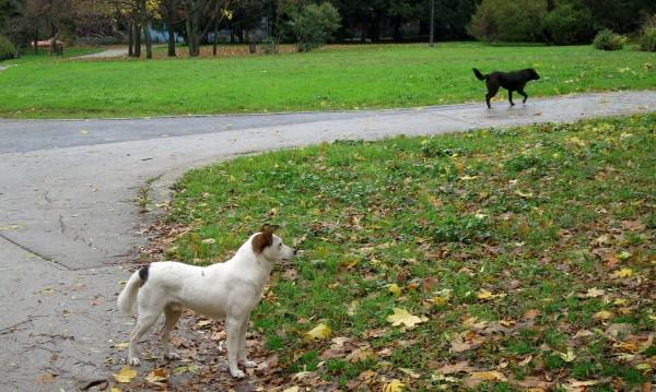 Безстопанствените кучета – 24 хил., приютите са 47