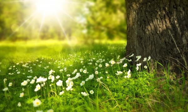 Времето днес: Слънчева сутрин, температурите до 33°C