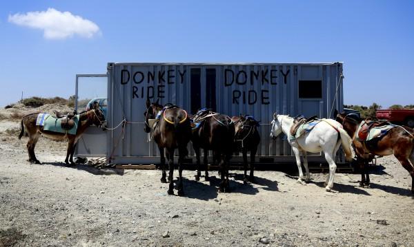 SOS за магаретата на Санторини! Дебели туристи им вредят