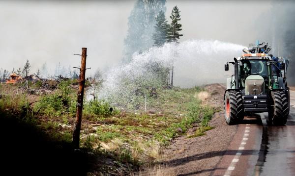 Берачите на боровинки в Швеция да не палят огън на открито