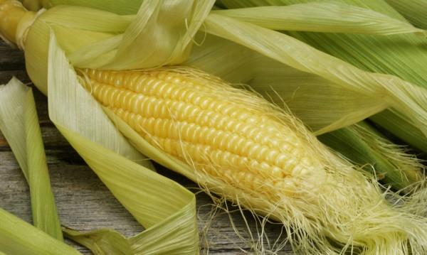Брюксел пусна ГМО-то, одобри 4 царевици за храна