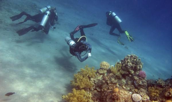 Акула уби турист в египетски курорт на Червено море