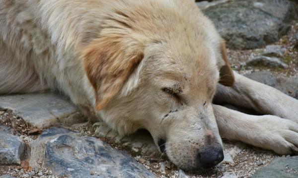 Мъртви кучета и котки: Масово тровене стресна Петрич
