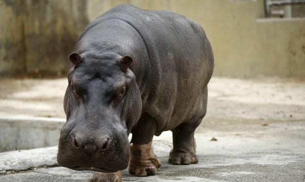 Китайски турист загина в Кения... нападнат от хипопотам