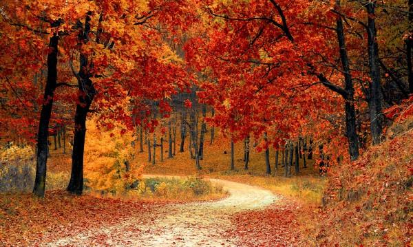 Лъвът на мач, Овенът на люлка. Какво да правят зодиите през есента?