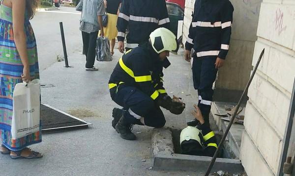 Заклещени в шахта! Пожарникари спасиха четири котета