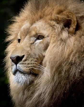 Лъв, Козирог... Кои зодии са с най-голямото его?