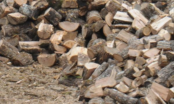 Дърва за огрев няма, изнасяли се за Румъния, Италия, Гърция