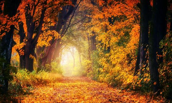 Вълшебна есен чака 3 зодии: Кои са те?