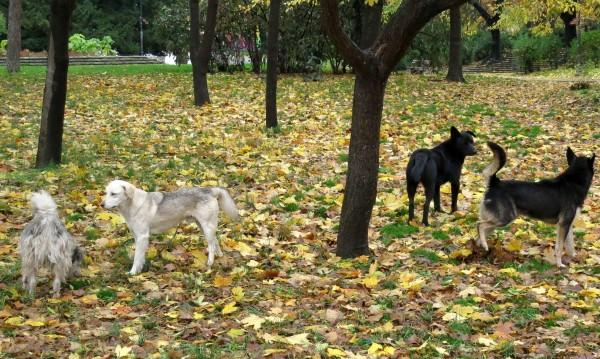 Терор! Бусове изсипват кучета в Пазарджик