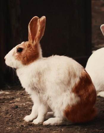 Калифорния забрани тестването на козметика върху... животни