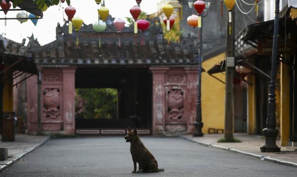 В Ханой призоваха: Не яжте кучешко и котешко месо!