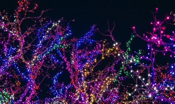 За истинско щастие: Коледната украсата! Сега!