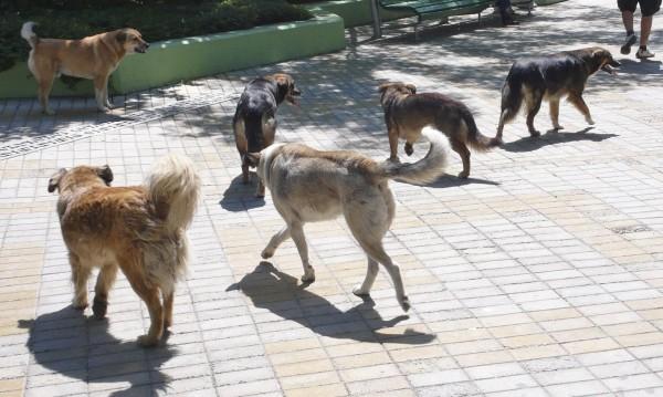 Отровено куче в детска градина изплаши врачани