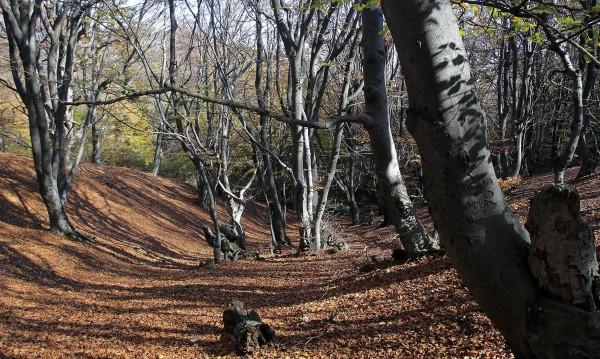 Времето през уикенда: Есенно слънце с температури до 24°С