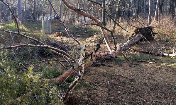 Ураганен вятър събори дървета и клони в Русенско