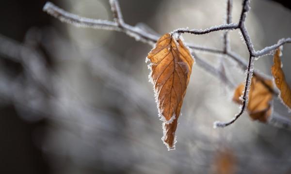 Студът идва през уикенда, първият сняг – на 18 и 19 ноември