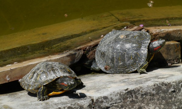 Задържаха защитени костенурки на Капитан Андреево