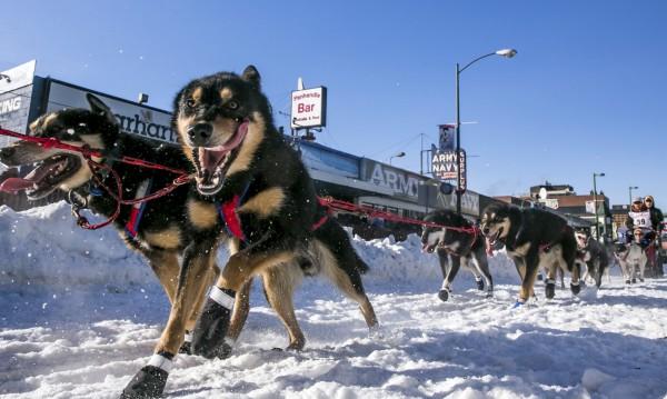 Нов вид транспорт из Дания: Кучешки впрягове!