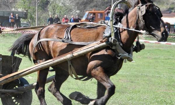 Дий, дий! Каруца с кон се обърна, ранена е млада жена
