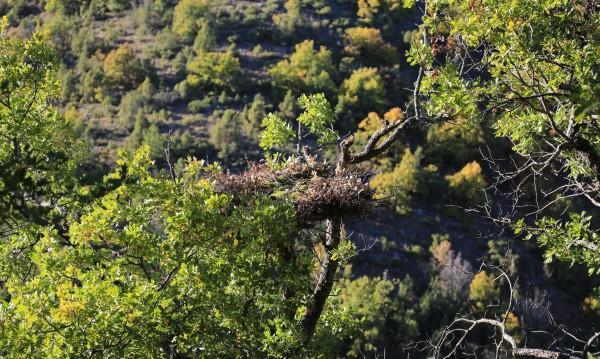 Изкуствени гнезда из Родопите за изчезнали лешояди