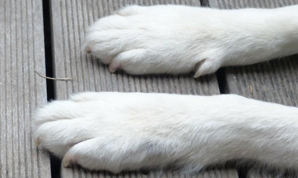 Полицаи нищят смъртта на домашно куче в Пазарджик