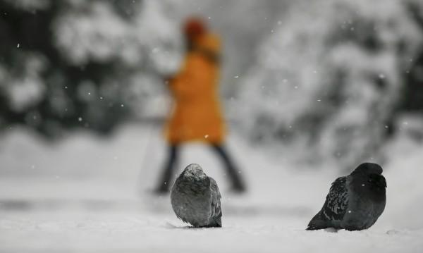 Неделя: 10 см снежна покривка в 10 области в страната