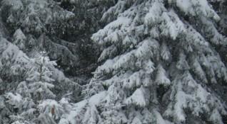 Снегът вече затрупа, на връх Ботев – 16 сантиметра