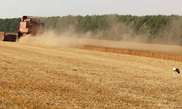 ОАЕ търсят да купят хиляди хектари земя в България – да се хранят!