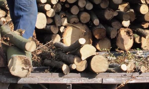 54% от българите се отопляват на дърва и въглища