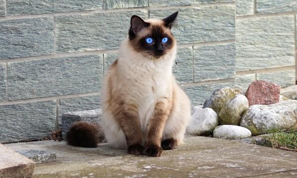 Кажи ми какви котки харесваш, да ти кажа какъв си