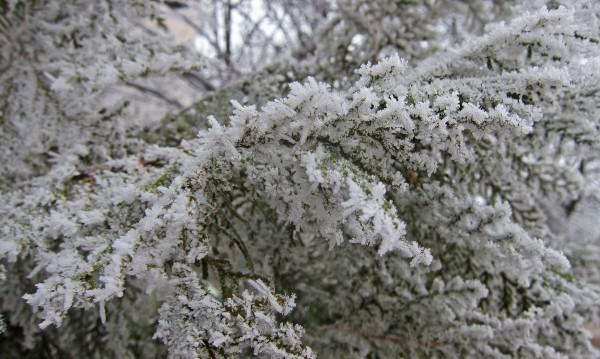 Слънчева зима, а от неделя чакаме снега
