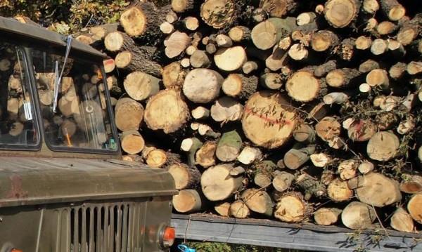 За месец и малко: Хванаха 130 каруци с незаконни дърва