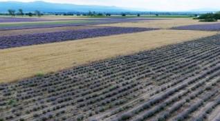 Дават по-лесно земеделска земя на млади фермери