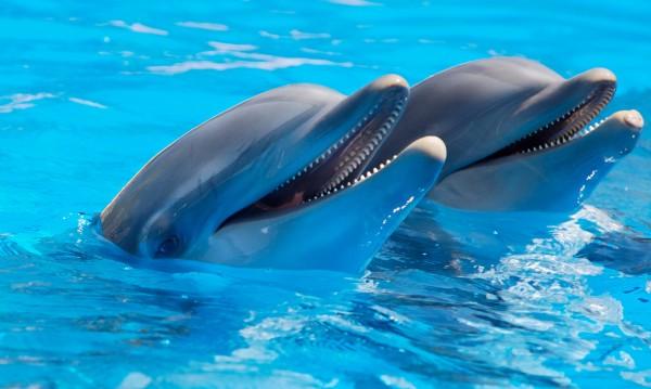 """Делфините – фенове на телевизията и на """"Спондж Боб"""""""
