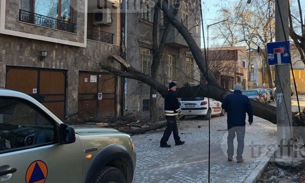 Дърво падна върху жилищен блок в центъра на Пловдив