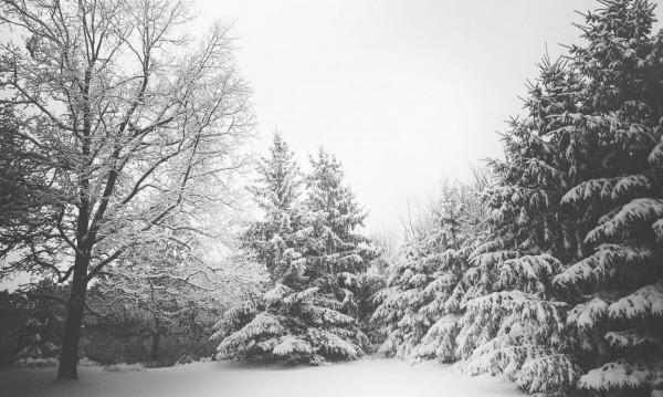 Февруари топъл, март – непредвидим! Какво време ни очаква?