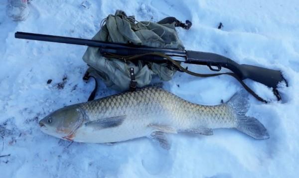 На лов за патици и се прибираш с 15-килограмова... риба?!