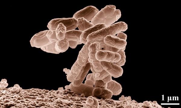 Не бактерии, а гъбички причиняват 10% от пневмониите