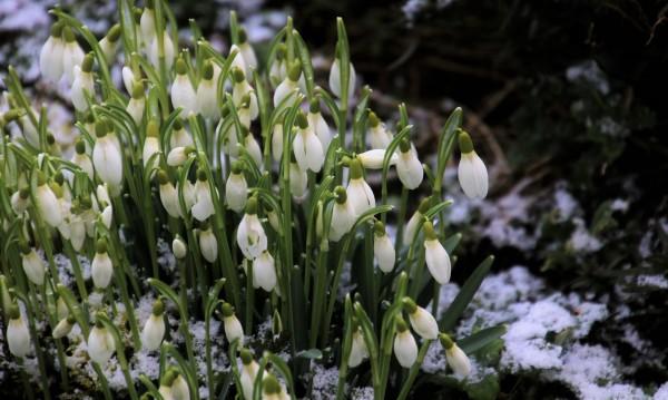 През идния февруари: Градусите от -13°C до пролетните 19°C