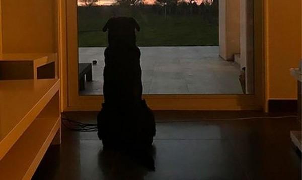 Тъжно! Кучето на Сала все още го чака