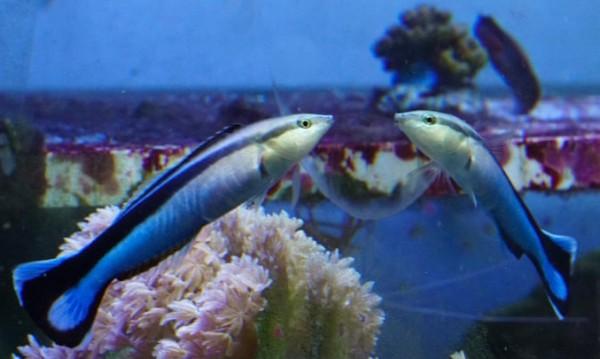 Откритие: Рибите не са късопаметни и са по-умни, отколкото мислим!