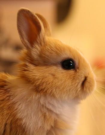 Годината на Жълтата Земна Свиня: Какво да очакват Зайците?