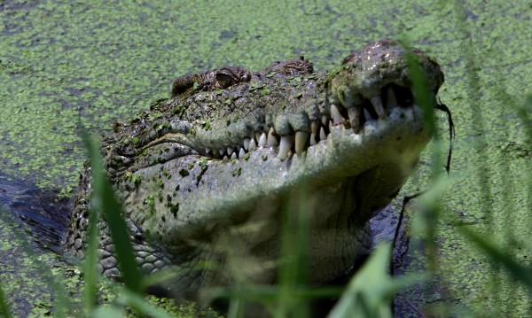 Крокодил изяде мъж пред очите на племенника му