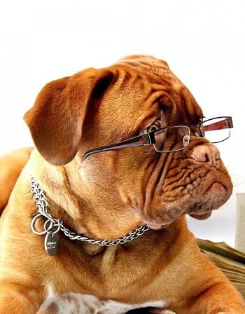 Годината на Жълтата Земна Свиня: Какво да очакват Кучетата?