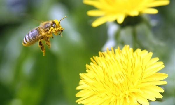 2 млн. баварци искат референдум за спасяване на пчелите